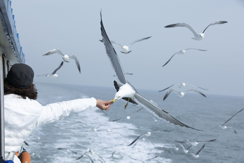 https://pixabay.com/photos/seagull-sea-seagulls-flock-feeding-4795739/