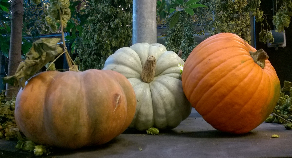 3 big pumpkins